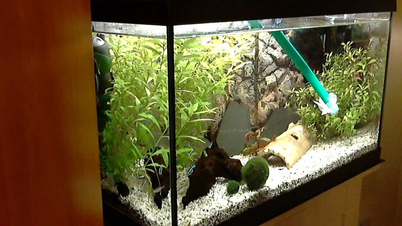 add new water in aquarium