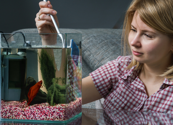 aquarium side cleaning
