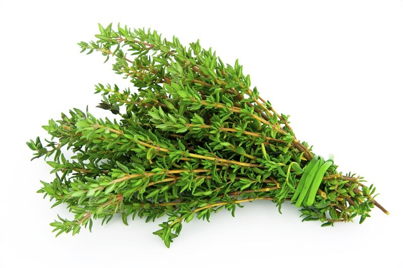 Medicinal plants for cough and colds