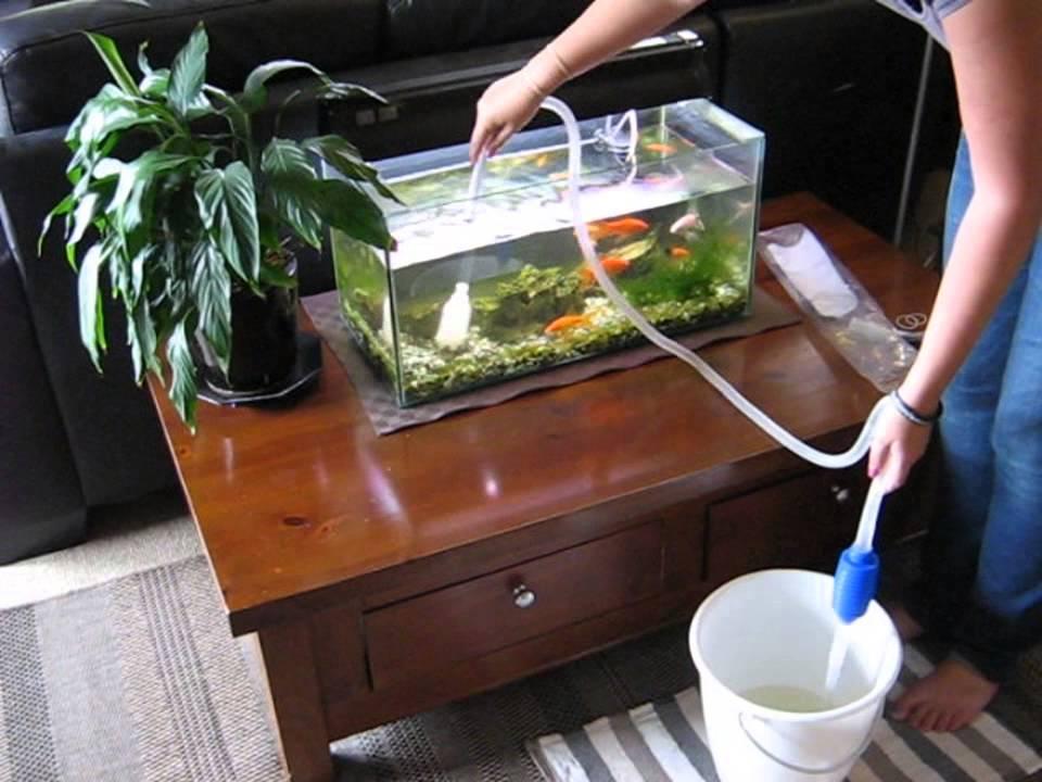 aquarium siphon cleaning
